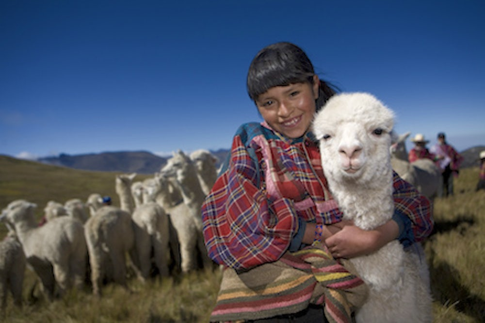 Gift of alpaca
