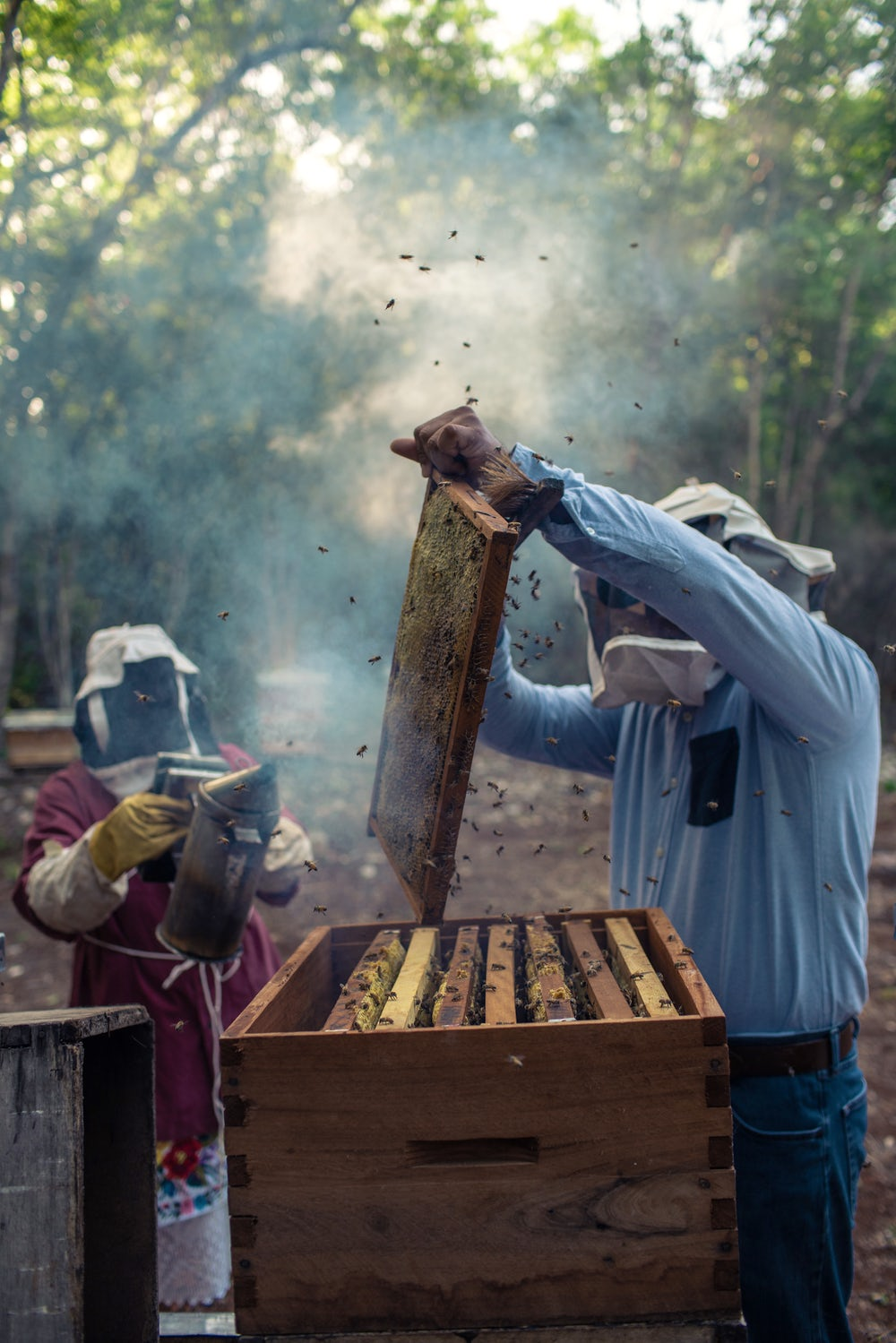 Mexican honeybee farmers