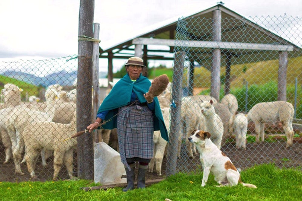 Ecuadorian farmer with alpaca