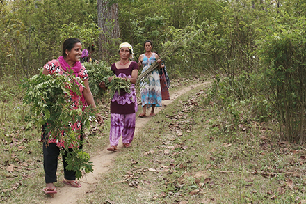 Bindu and other self-help group members walk through the Madhyavarti Forest.