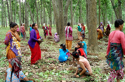 Bishu and other self-help group members work at the fodder and forage plantation in the community forest.
