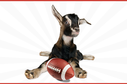 baby goat with football