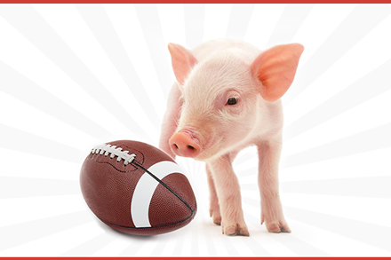 pig with football