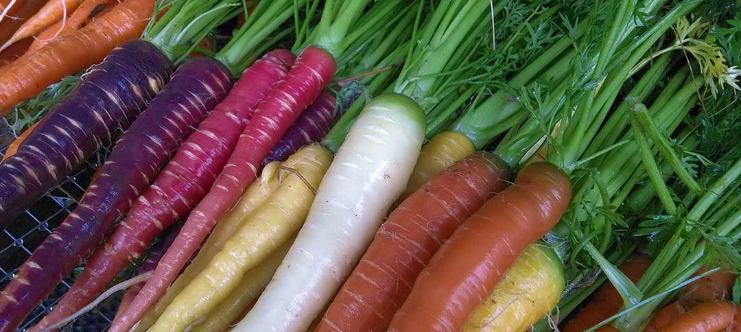 What S Growing On Purple Carrots And Biodiversity Heifer