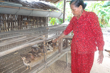 Ton Phat successfully raises and sells chickens on her farm.