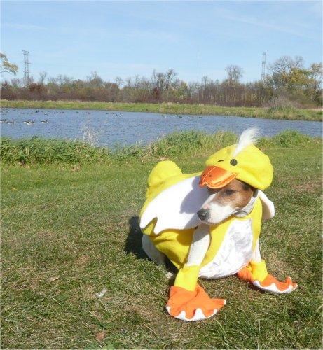 Halloween Duck