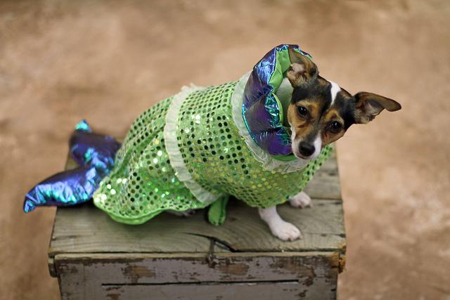 Halloween Fish