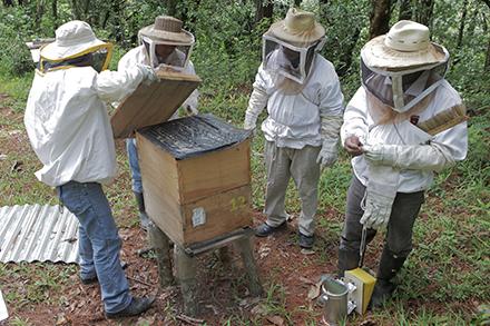 Beekeepers wear veiled hats to conduct beehive maintenance in Santa Avelina, Guatemala.