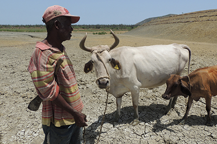 A farmer and his cow stand in the dry lake bottom.