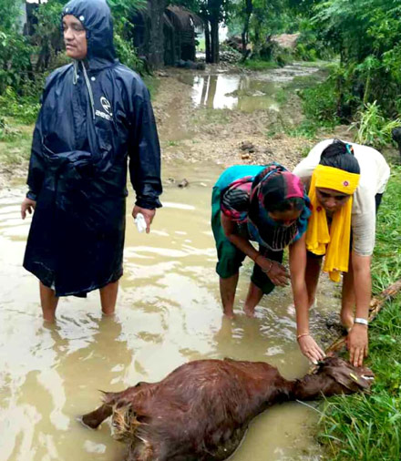 We know this image is shocking, but the situation is desperate. Flooding was so severe in our project areas, many families lost livestock and crops. Your support will help these communities rebuild.
