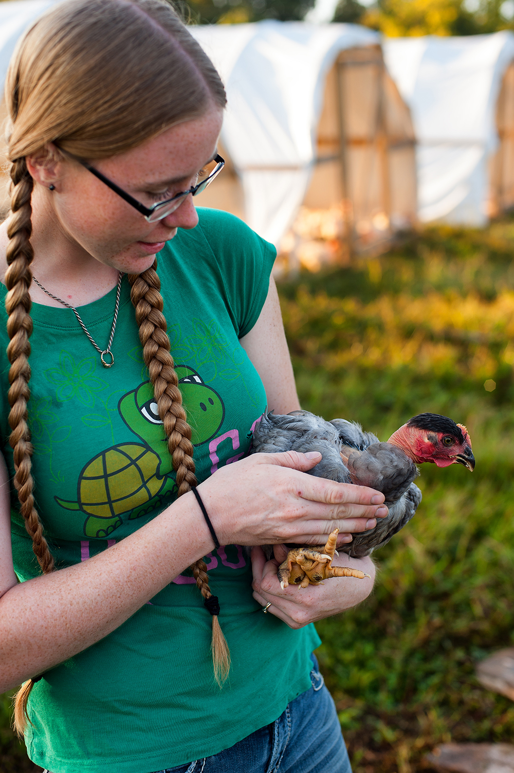 Just after sunrise, Kerry Harrington and her husband tend to the 300 broiler chickens they are raising.