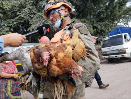A man holding an armload of chickens.