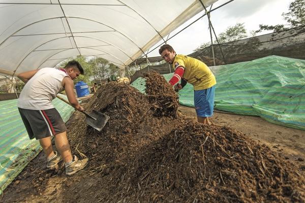 Cacao pods and manure are turned into compost near Caleta, Ecuador.