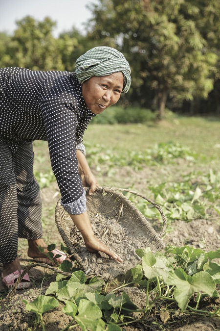 Mao Pheap applies compost to her plot of squash plants in Cambodia.