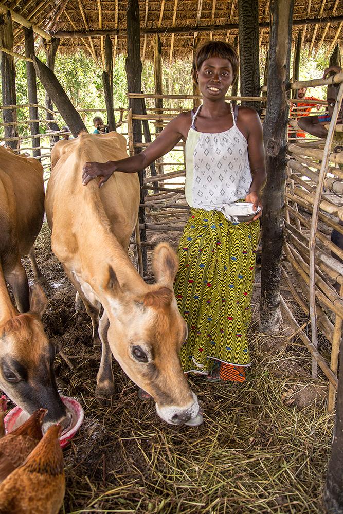 Esther Musonda feeds her cows.