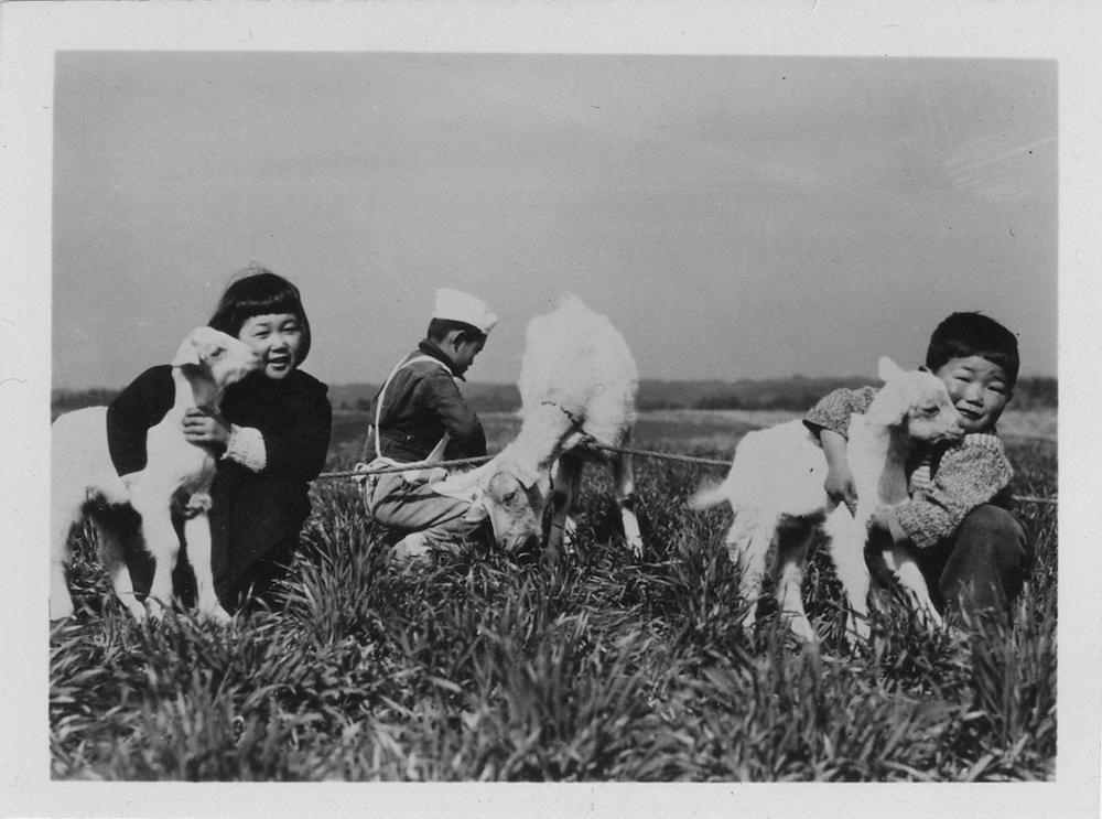 A black and white photo of two South Korean children hugging goats.
