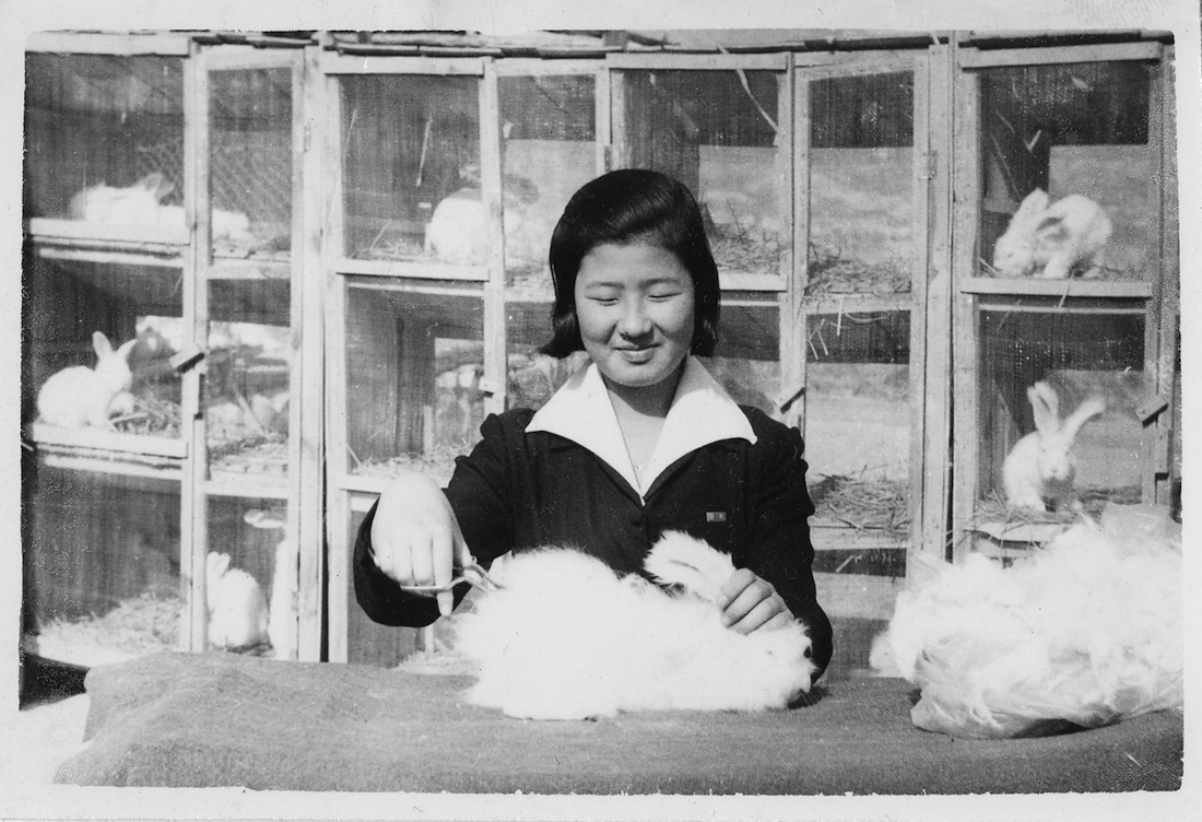 A black and white photo of a young woman sheering an Angora rabbit.