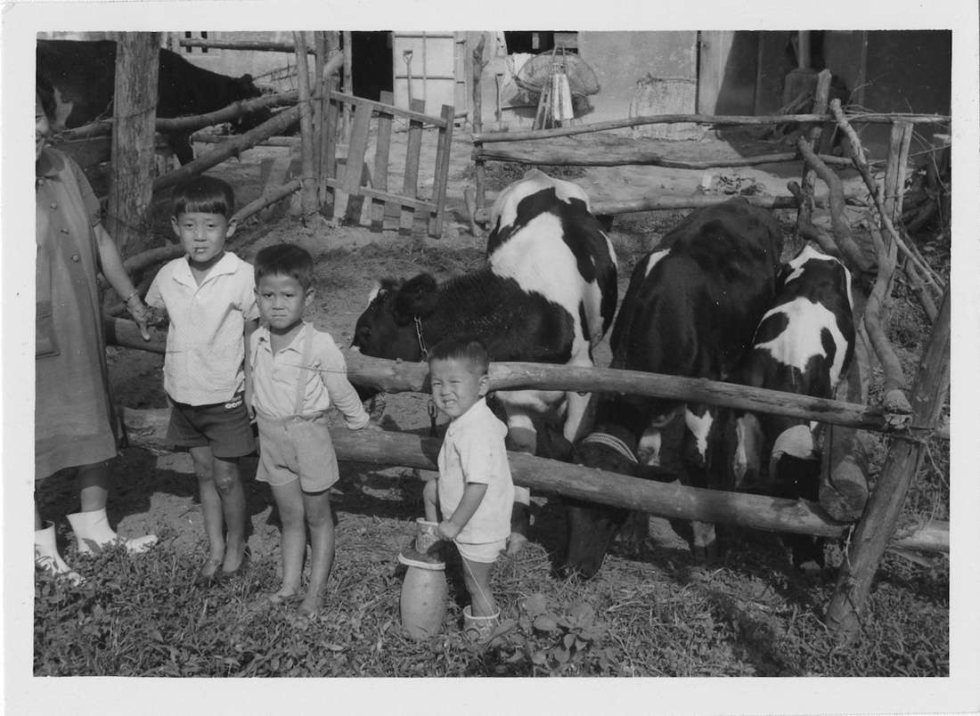 A black and white photo of three small South Korean children standing near a pin of cattle.