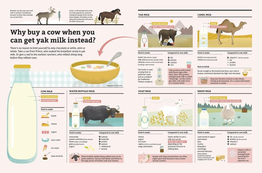 Pilih Susu Kambing Atau Susu Sapi, Ketahui 4 Perbedaanya