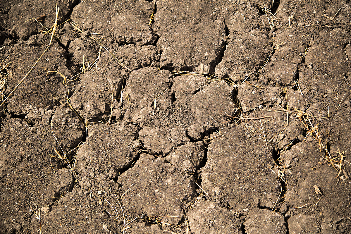 A close up of cracked, dry soil.