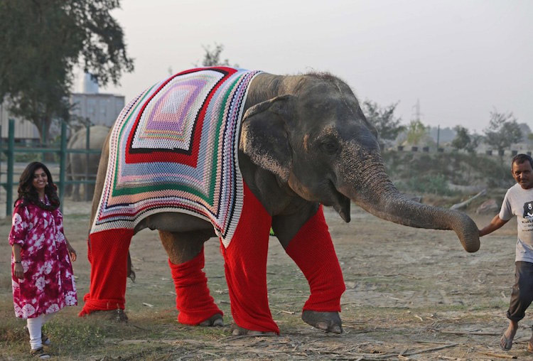 Two people guide a smiling elephant, who wears crocheted attire.