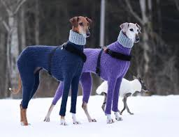 Two dogs with sweaters stand in the snow.