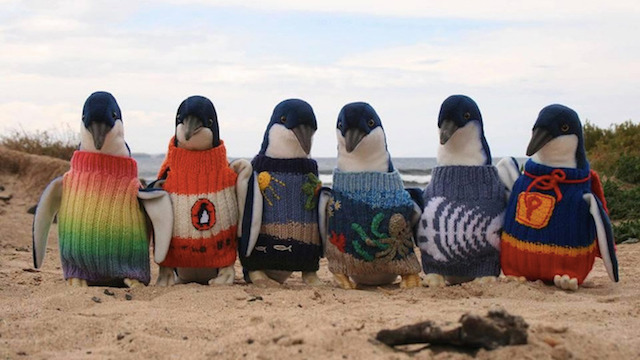 A group of penguins sport a variety of sweaters.