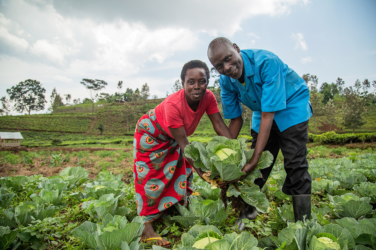 A man and woman stand smiling amongst a field of cabbage.