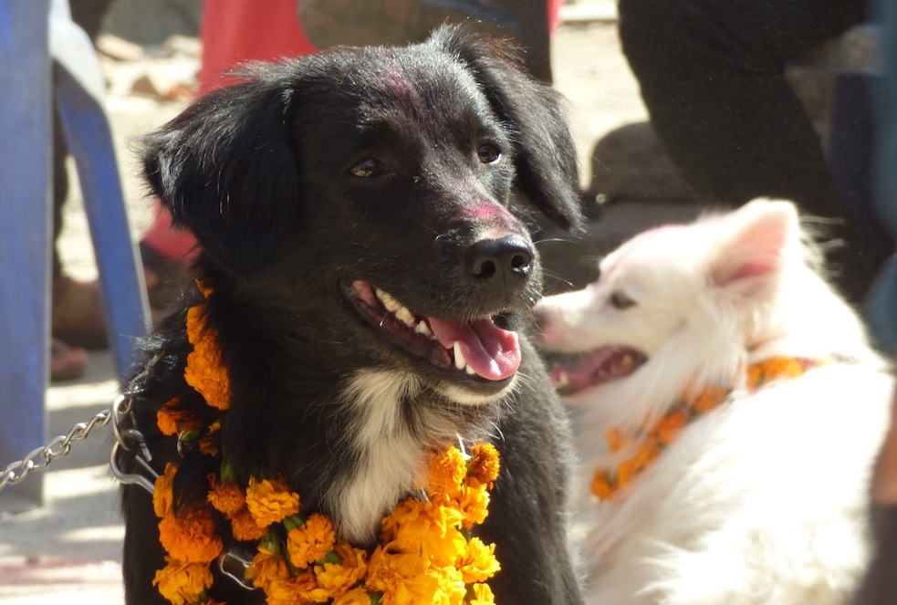 Two smiling dogs with flower necklaces.