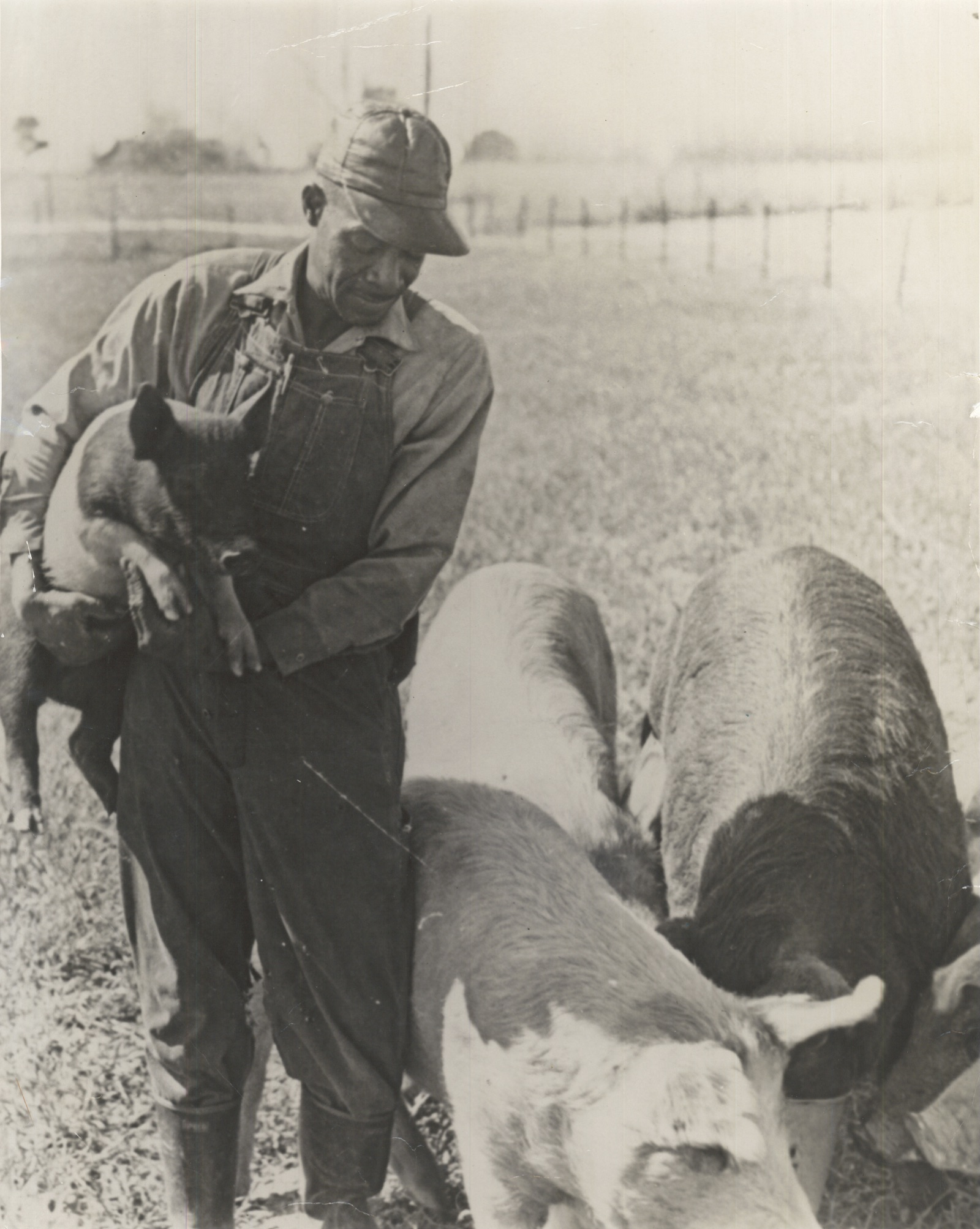 A farmer tends to his pigs in Prentiss, Mississippi