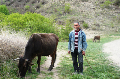 Vachagan Badalyan leads his cow back from pasture