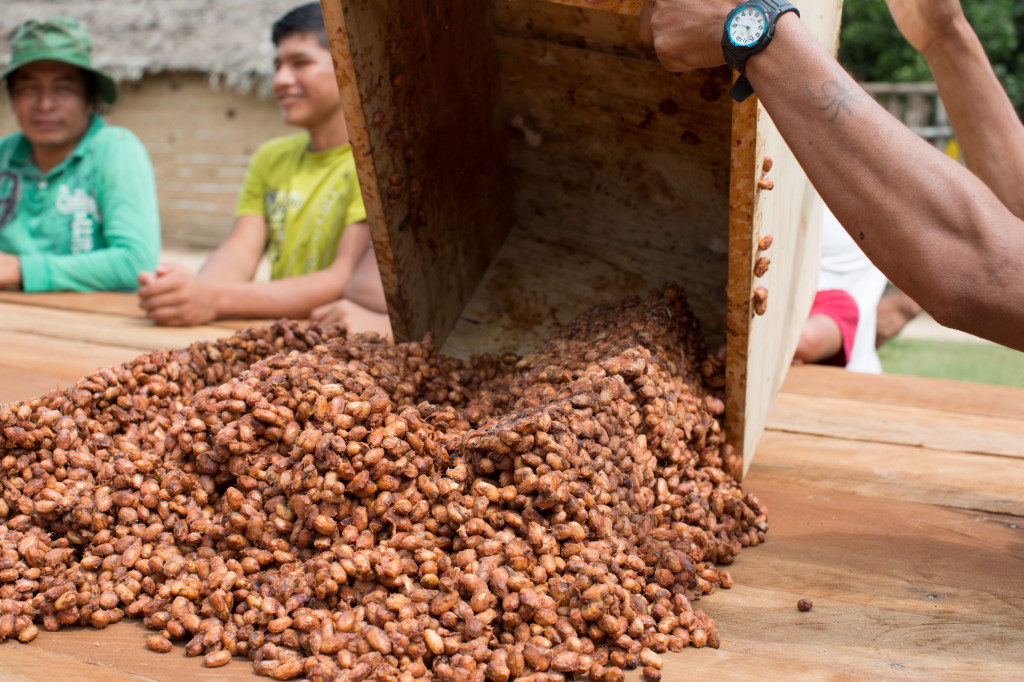 Recently fermented cacao is poured onto a table to be spread and dried. Photo by Dave Anderson, courtesy of Heifer International.