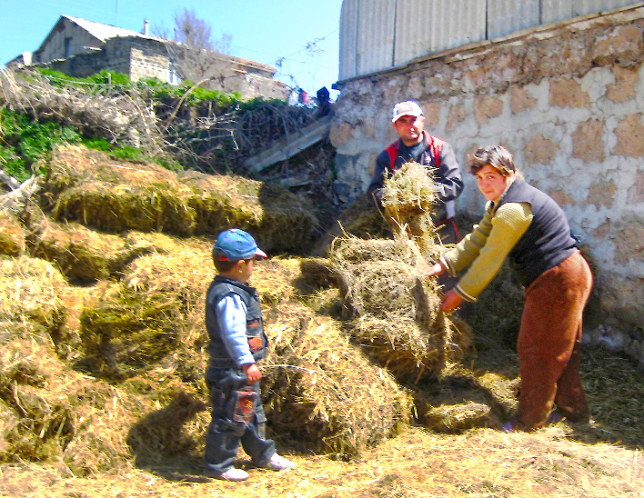 The Mikaylyan family prepare their barn for a new cow. Photo by Liana Hayrapetyan, Communication and PR Coordinator, Heifer Armenia