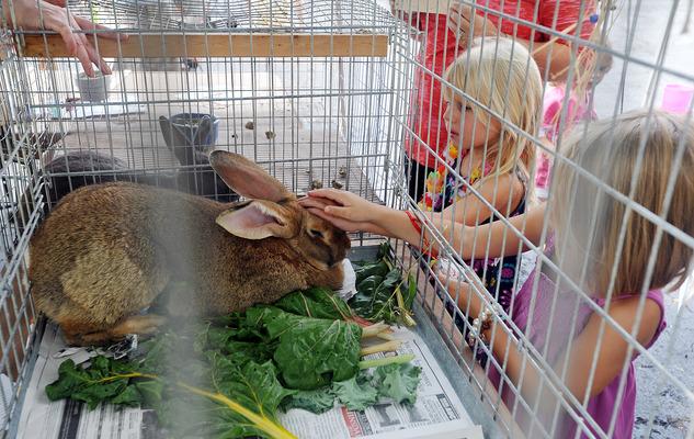 Clarendon Hills Family Farm Fest