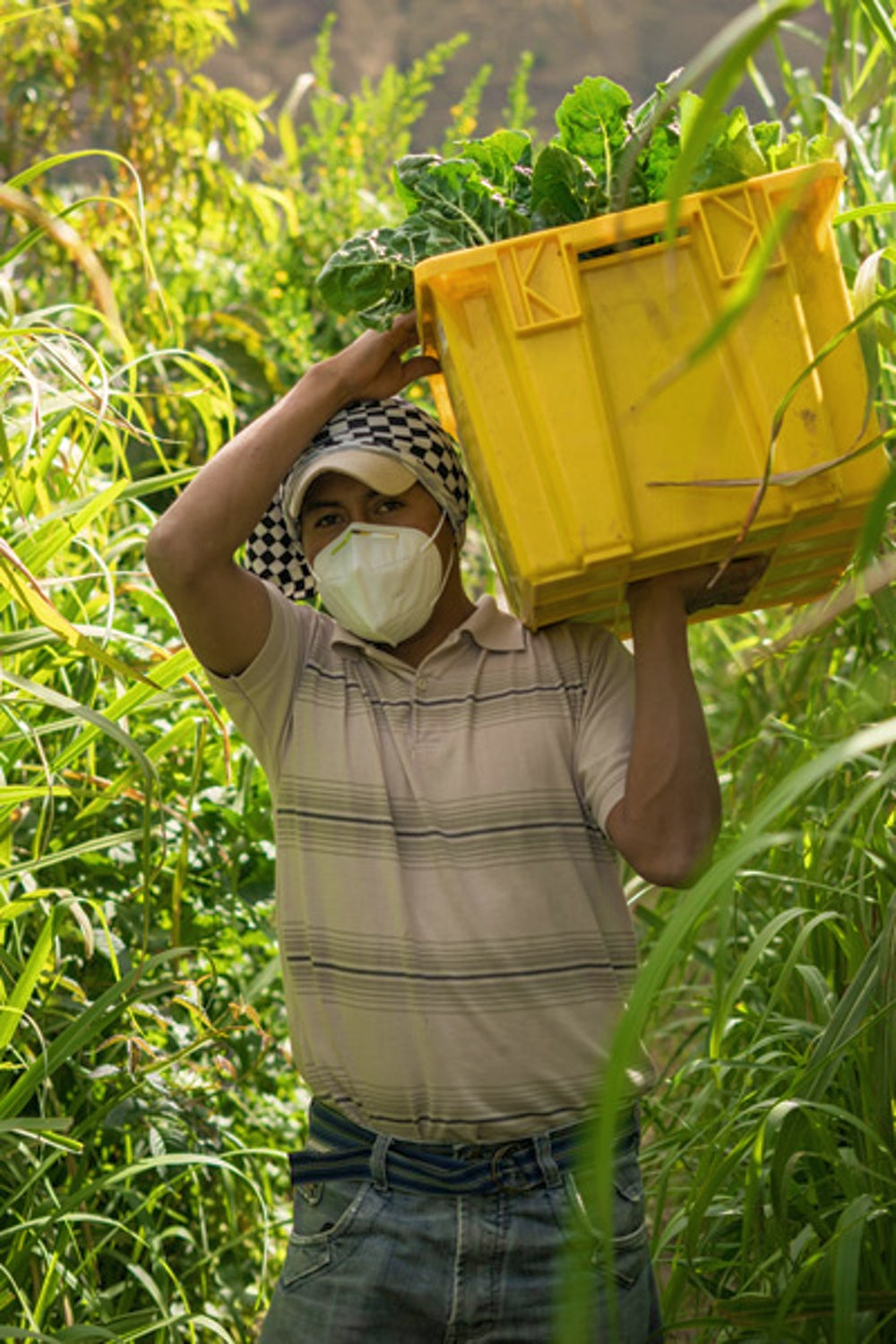 Man carries basket with vegetables through a field