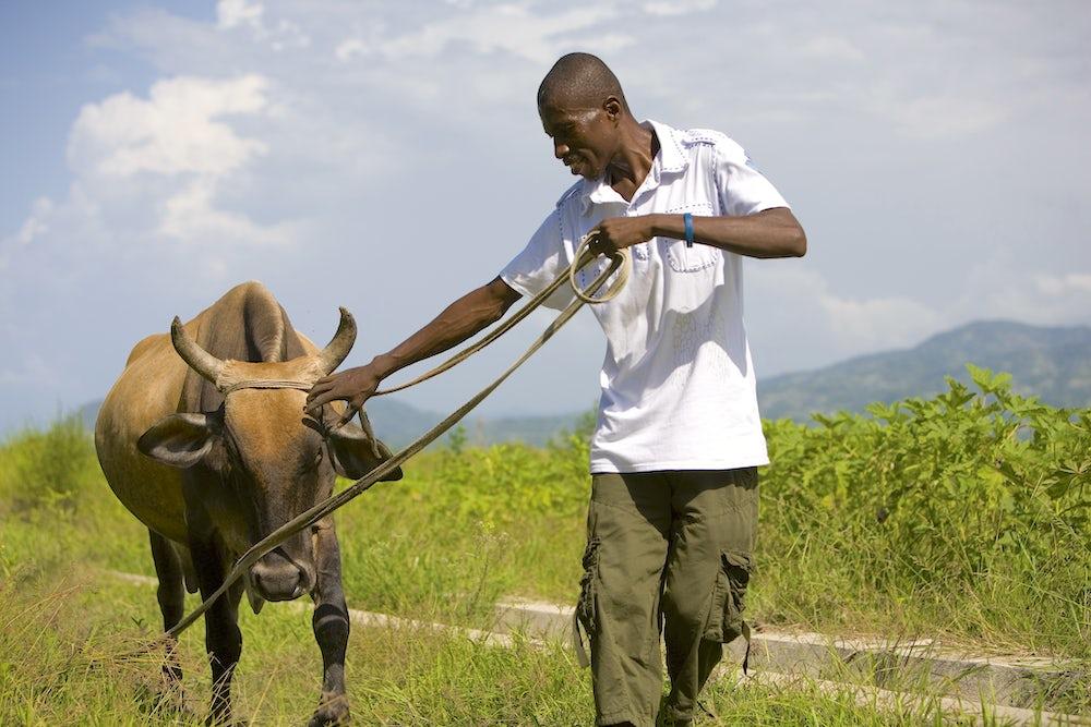 Haitian farmers REACH