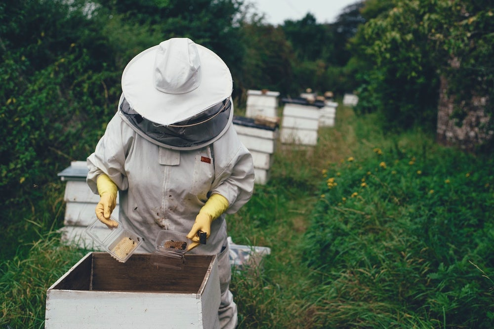 A beekeeper in a white beekeeping suit examines a hive of bees.