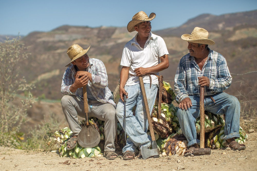 Three farmers in Mexico sit atop their agave harvest, smiling at one another and holding their tools.