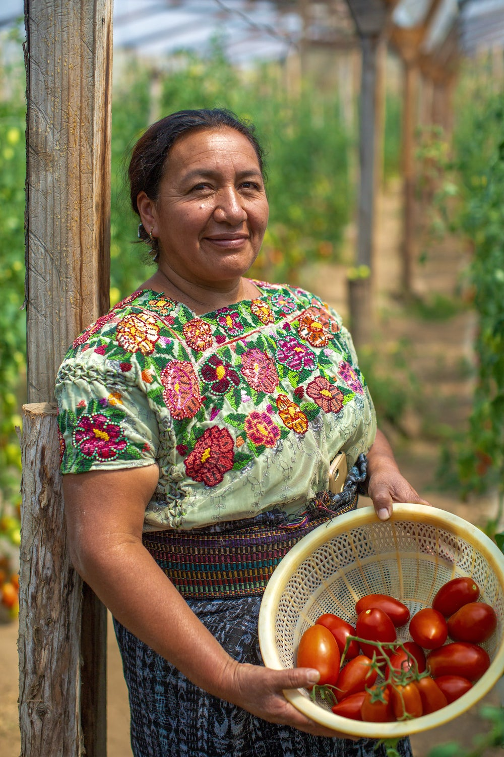 A woman smiles at the camera, holding a basket of tomatoes she harvested from her greenhouse in Guatemala