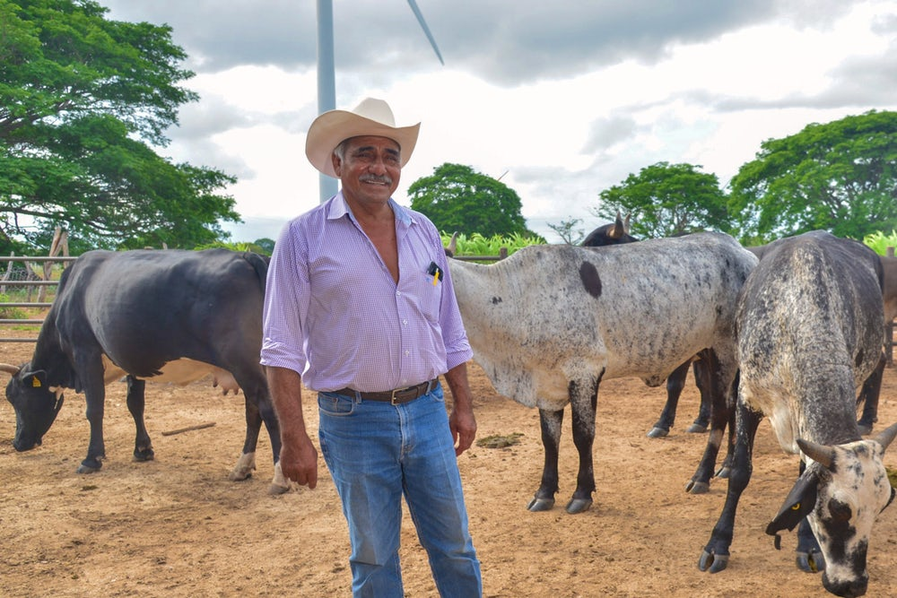 A cattle farmer stands with his cows.