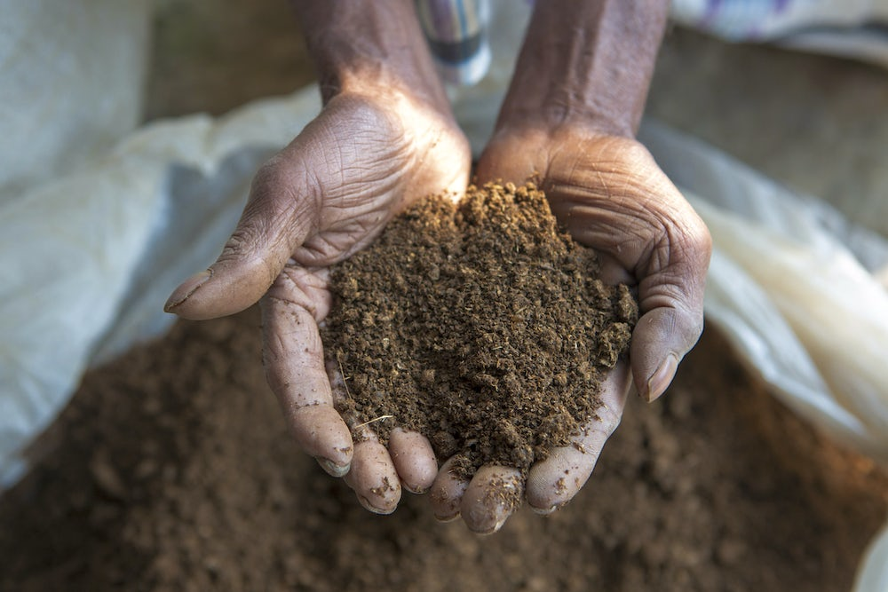 A close up shot of a woman's hands holding vermicompost.
