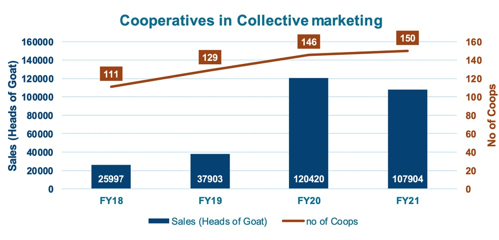 A graph tracking goat sales from 2019 to 2020.