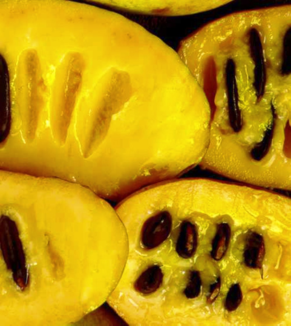 The yellow inside of a pawpaw.