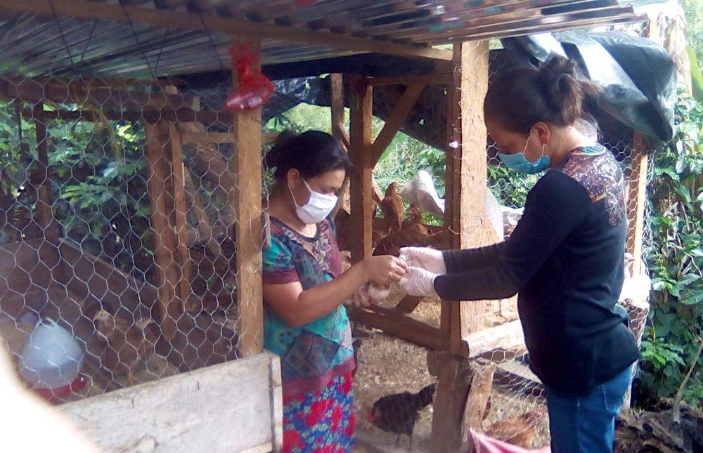 Two women stand outside of a chicken coop. One holds a small chicken while the other examines it.
