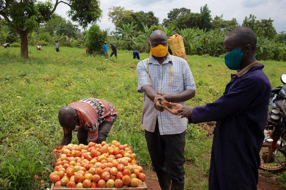 A Ugandan tomato farmer exchanges money with a merchant.