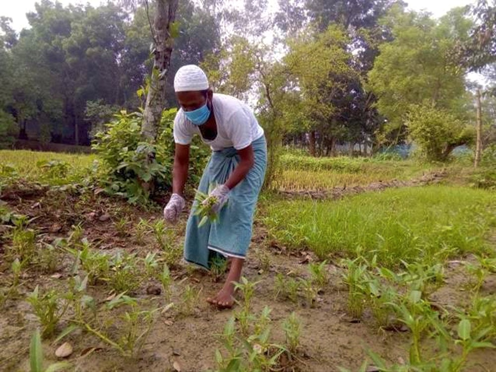 A farmer wearing a face mask as a precaution against COVID-19 harvests vegetables on his farm in Bangladesh.