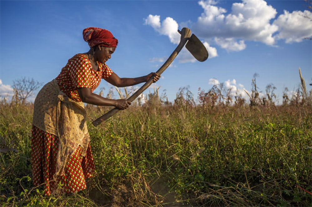 Farmer works in her peanut field in Zambia