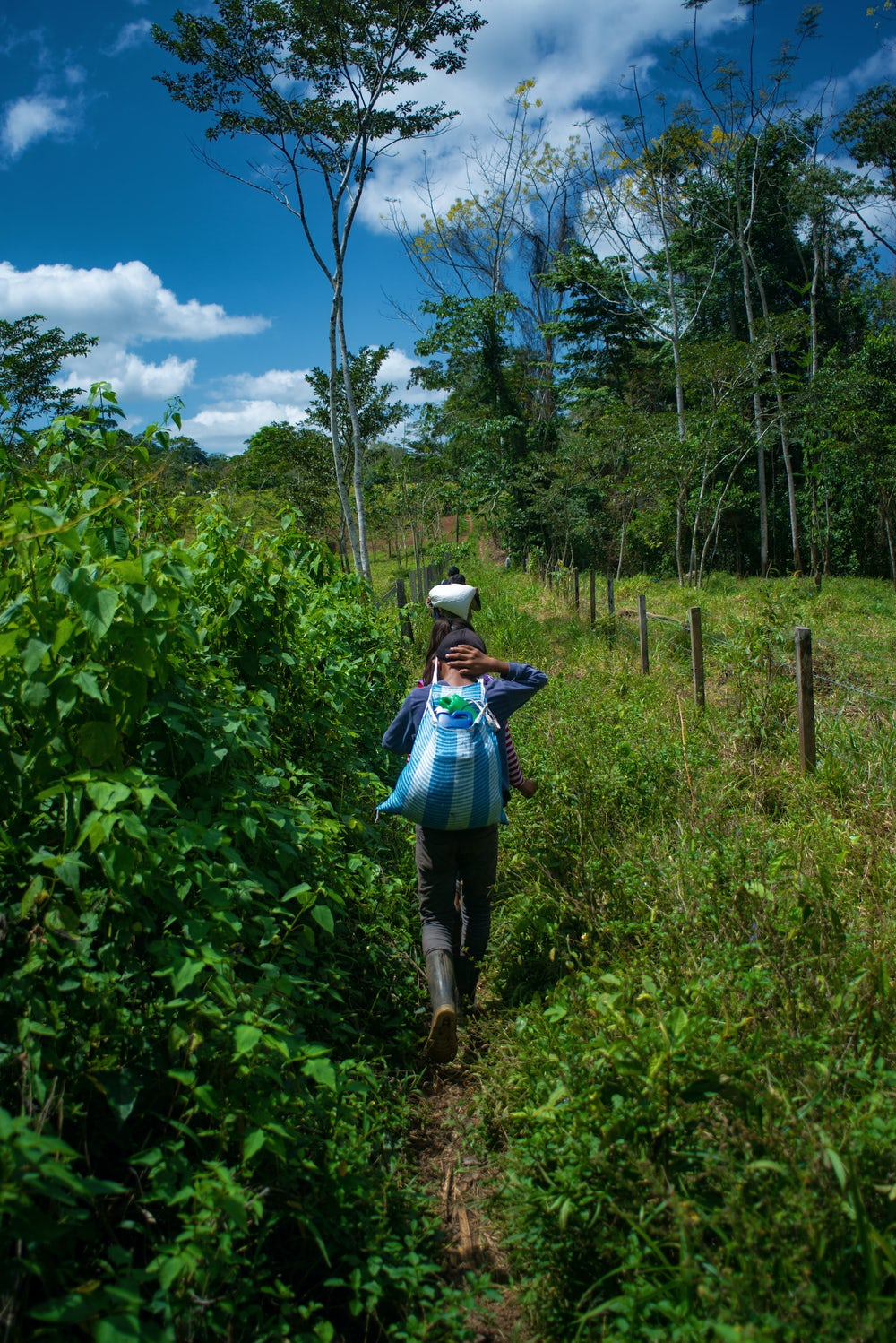 A young cardamom farmer walks down a path in a cloud forest, carrying a sack of spice on her back.