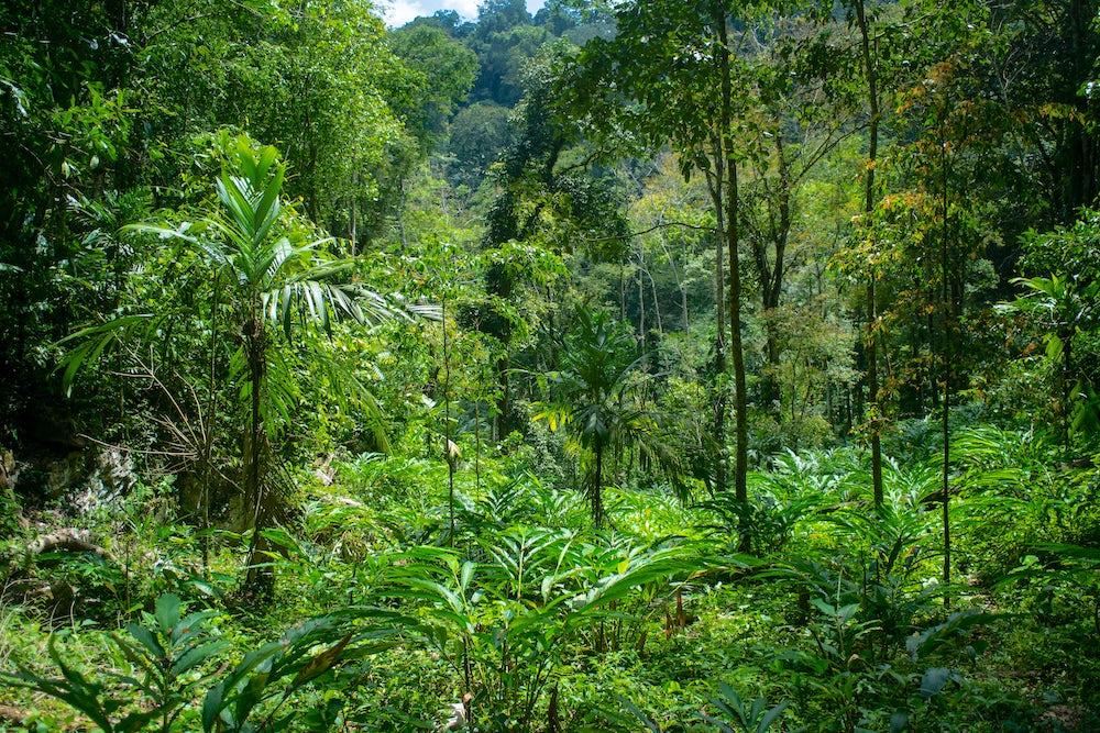 The rich, green rainforest of Alta Verapaz.