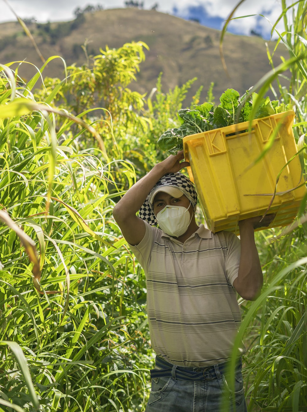A male Ecuadorian farmer, wearing a face mask, carries a box of vegetables on his shoulder.